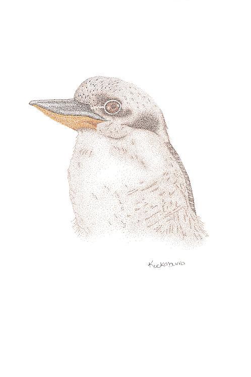 Original Kookaburra