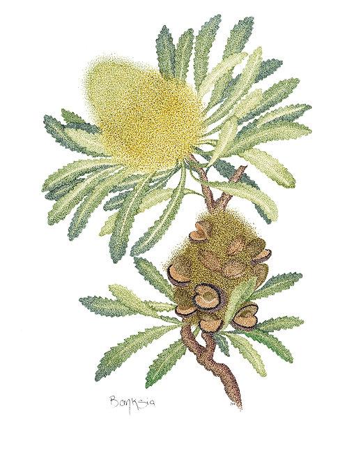 Original Banksia