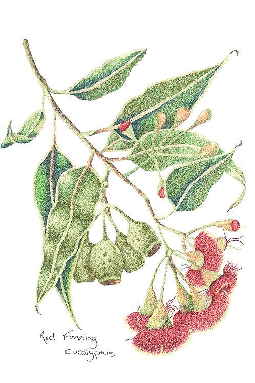 Original Red Gum Blossom