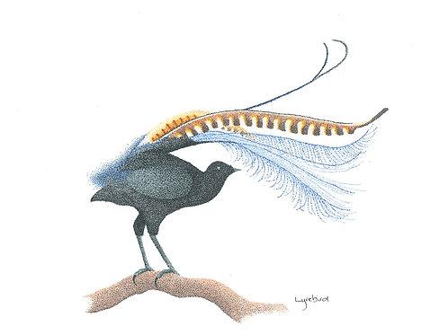Original Lyrebird
