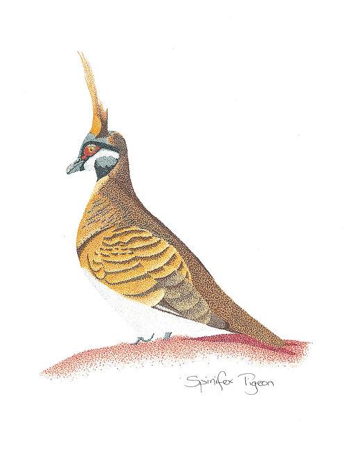 Original Spinifex Pigeon