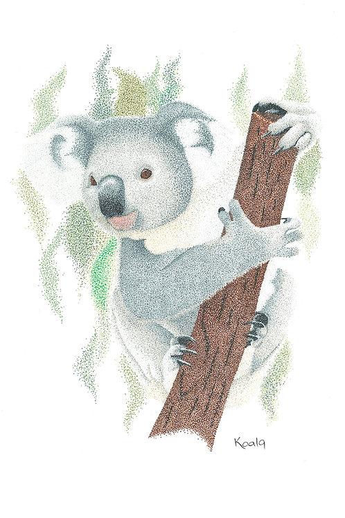 Original Koala