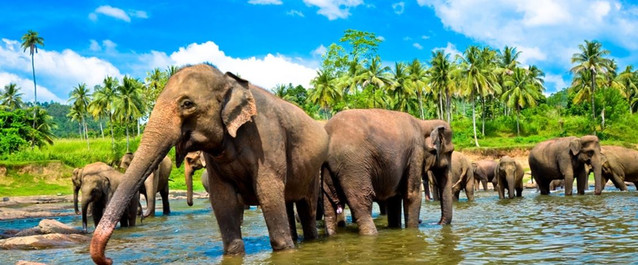 Elephant Orpanage, Sri Lanka