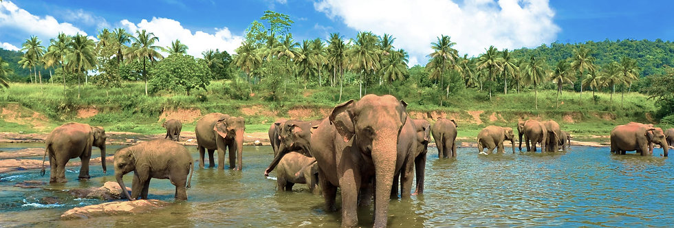 Sri Lanka 7-Day Itinerary