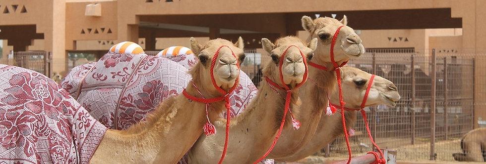 UAE_Oman 10-Day Itinerary