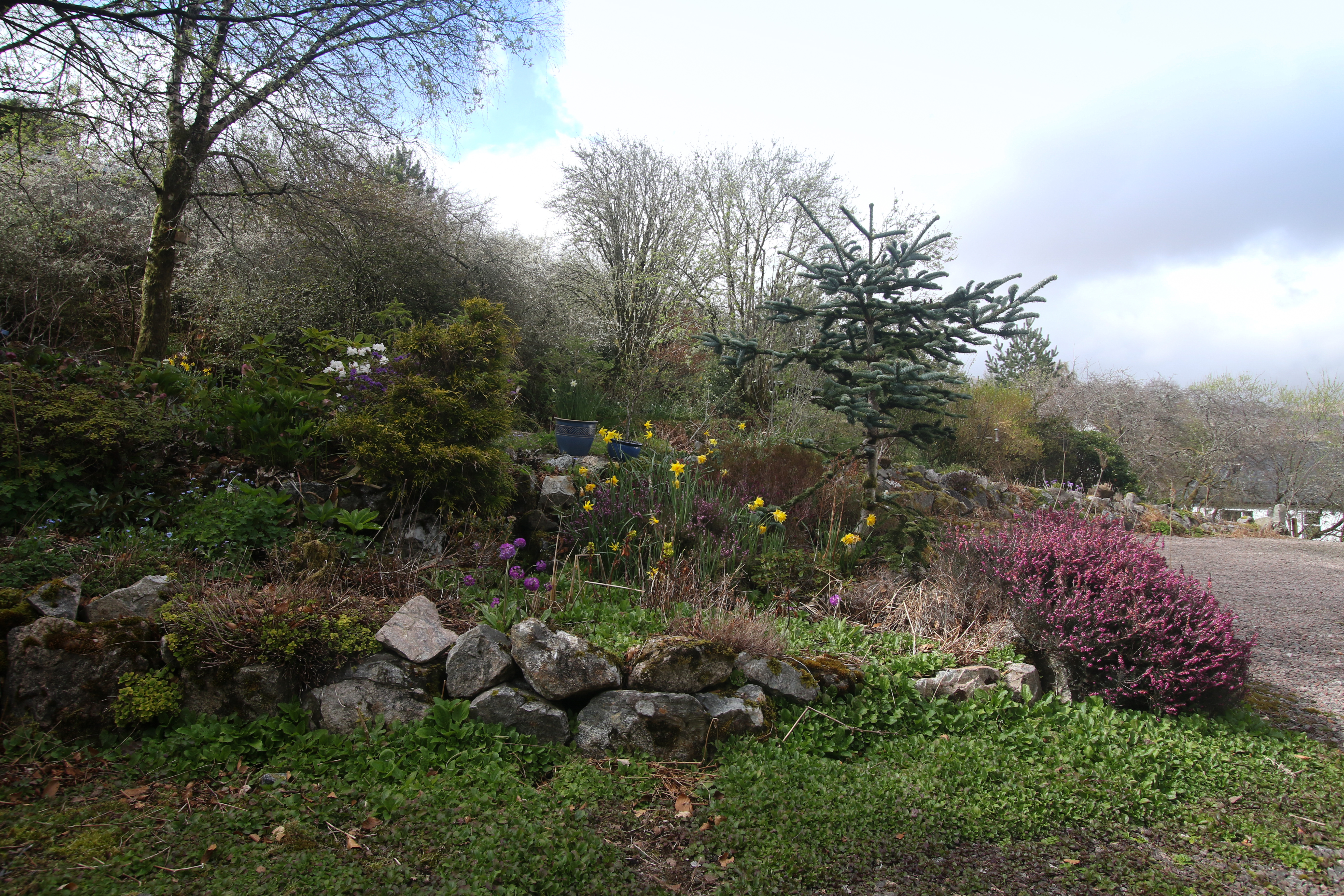 the gardens to the front of the cottage in spring