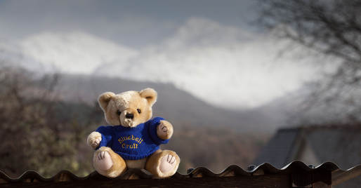 The Bluebell Bear