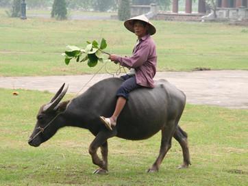 """Länderinfo Vietnam - """"Good Morning"""" – Vietnam"""