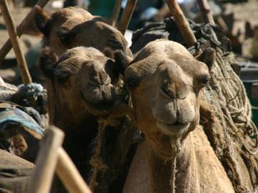 Reisebericht Äthiopien