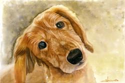 愛犬イラスト