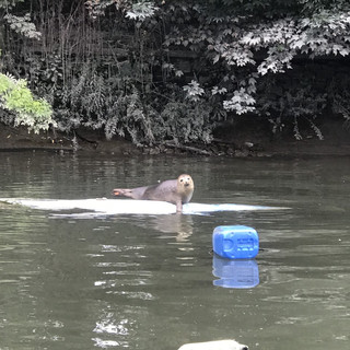 What Otters
