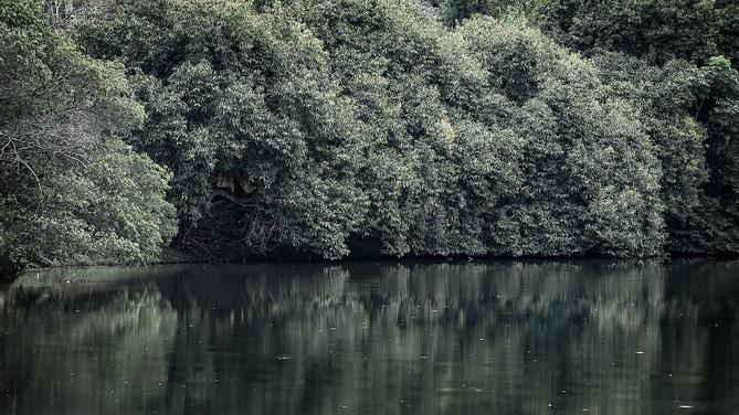 Lago e árvores.jpg