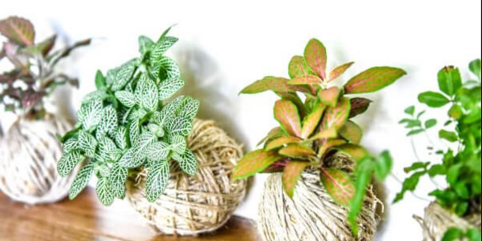 PLANTS & PROSECCO