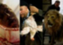 En Gadget Efectos Especiales creamos replicas humaas, partes del cuerpo y replicas animales realistas.