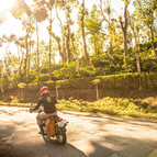 Ride through lush tea and coffee plantations