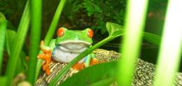 Taller de rèptils i amfibis a l'institut