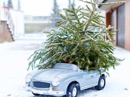 Book Your Christmas Tree Delivery Today