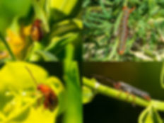 BioControl Insects 3.jpg
