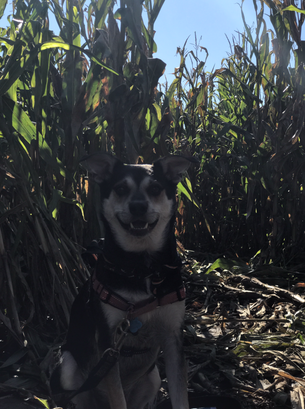 Get In the Fall Spirit With Your Dog!