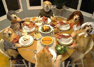 Keeping Your Pets Safe At Thanksgiving