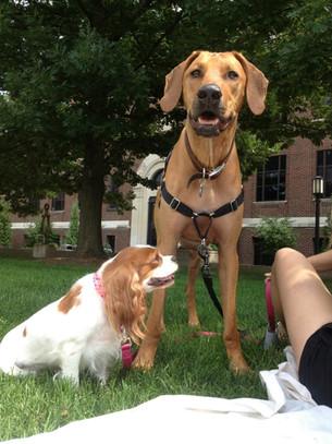 Canine Lymphoma Awareness Day