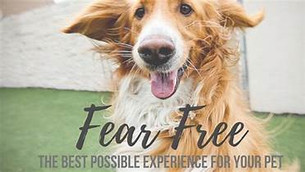 Technician's Corner: Medication For Fear-Free Visits