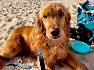 Beating The Summer Heat- Signs of Heatstroke in Pets