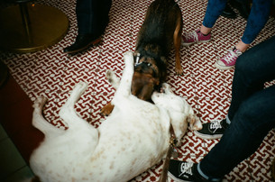 Dog Friendly Bars and Restaurants in Chicago