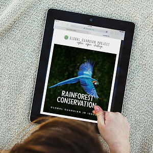 iPad_Mock_JR_Rainforest_Conservation_102