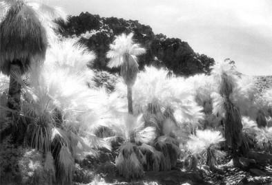 Palm Canyon, CA, Archival Digital Print, n.d.