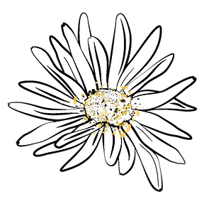 eva-marie-logo-1.6_Square Daisy - Color.
