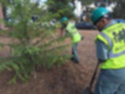 planting_trees.jpg