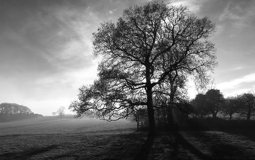 Tree-in-black-and-white.jpg
