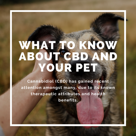 What to Know about CBD and Your Pet