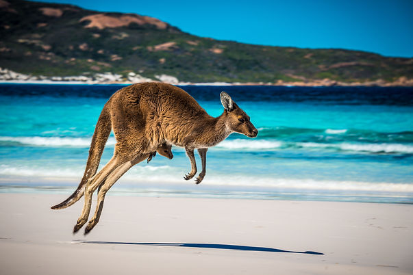 Canva - Kangaroo+Joey on beach.jpg