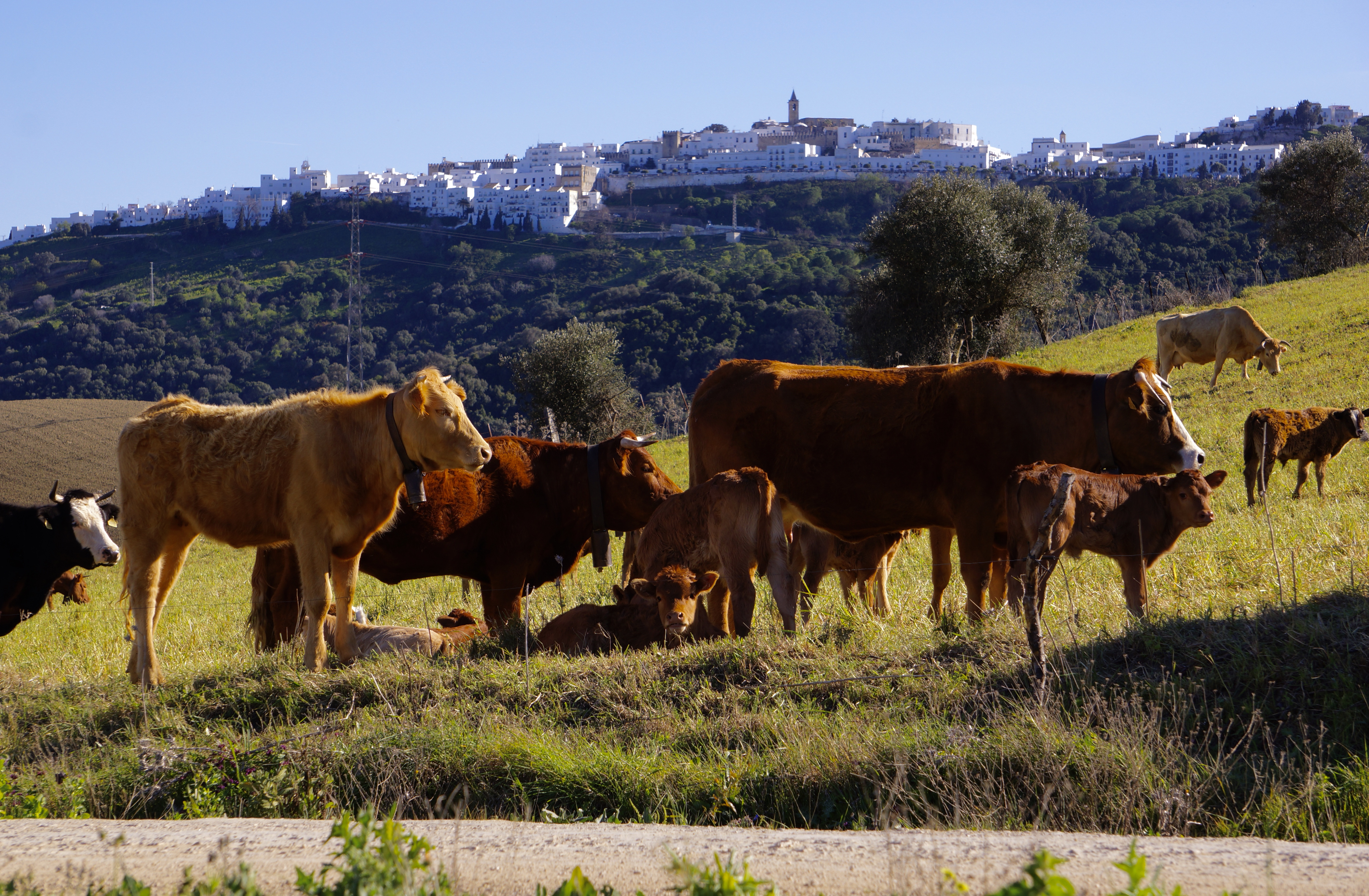 Vejer Countryside/ Campo