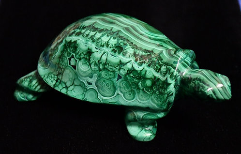 Malachite Turtle (Congo)