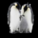 penguin-35638.png