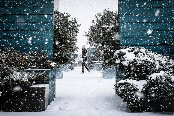 Winter Garden - Fine art street photography by Chris Silk