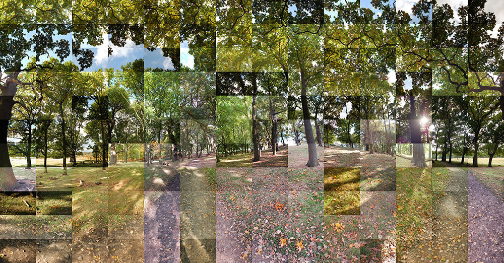 Richmond Park in Autumn - Panoramic photo collage by Chris Silk