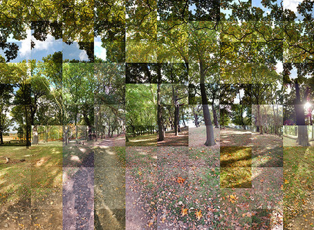 Panoramic Photo Collages by Chris Silk – Richmond Park in Autumn
