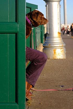 Dogleg - Fine art street photography by Chris Silk