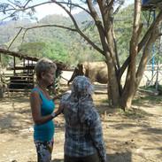 Using a surrogate to heal elephants. Chi