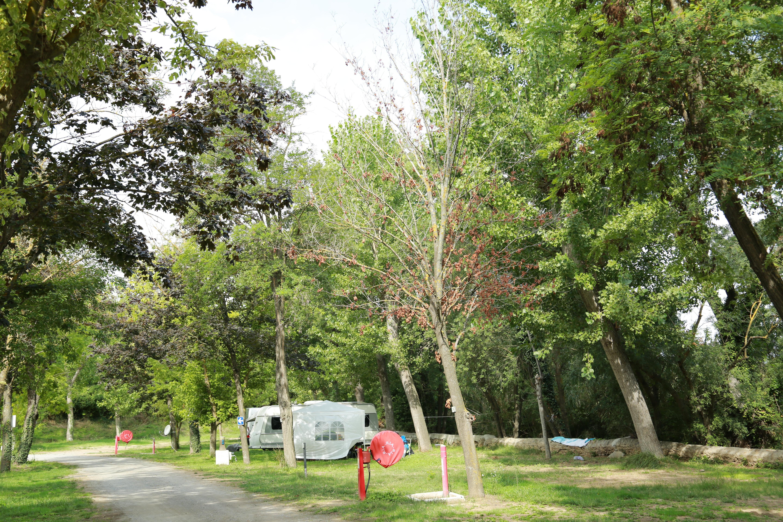 Allée arborée au Camping Le Garel.