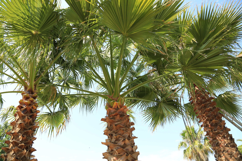 Espace aquatique et grands palmier