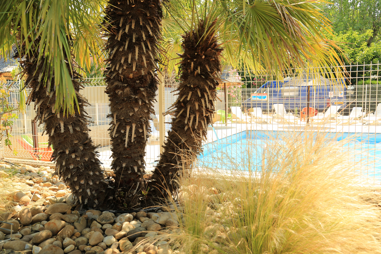 Belle piscine avec palmiers, Hérault