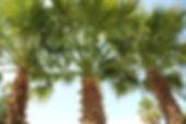 camping les mimosas****, Agde,Grau d'Agde, Languedoc, Occitanie,Plages