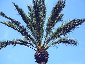 palm%2520tree_edited_edited.jpg