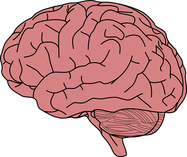 brain_PNG91.png