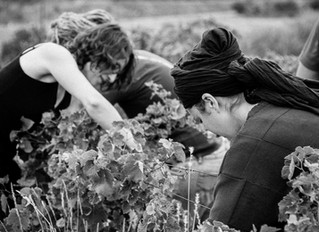 Vintage 2017 the harvest starts today!
